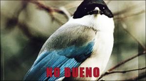 The Corvid Review - AW Magpie - No Bueno