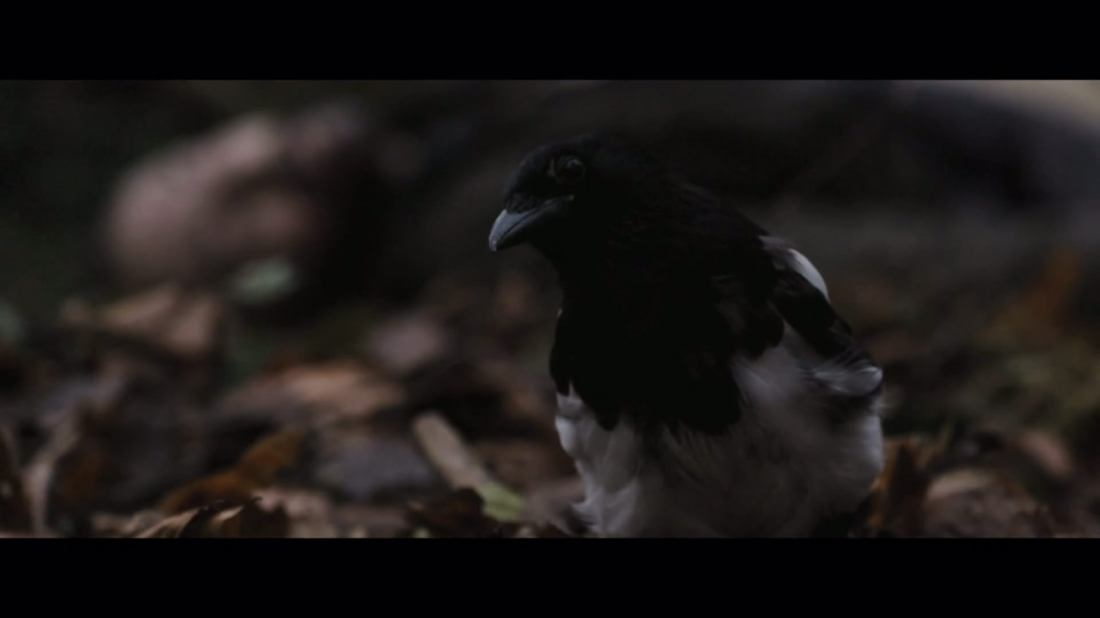 Magpie - 2014 -The Corvid Review (1)