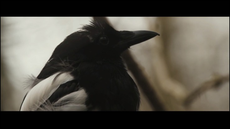 Magpie - The Corvid Review - 2014 (3)