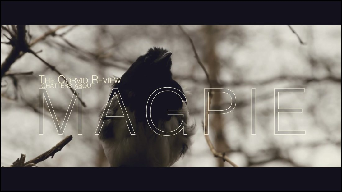 Magpie - The Corvid Review - 2014 (5)